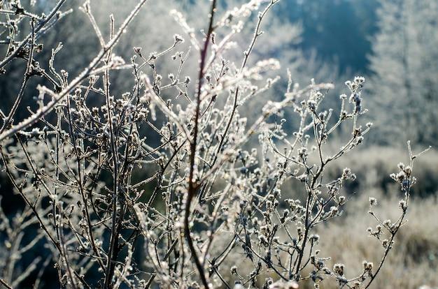 La prima gelata, la bella brina mattutina sull'erba