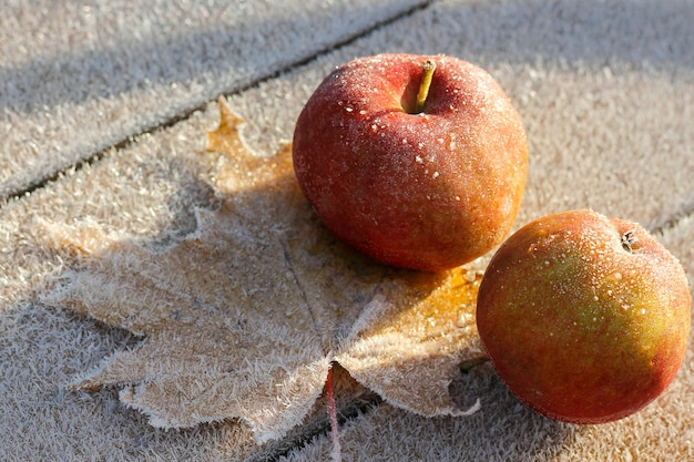 Le prime gelate nel tardo autunno. le mele e la foglia d'acero erano coperte di brina. sfondo autunnale, vista dall'alto