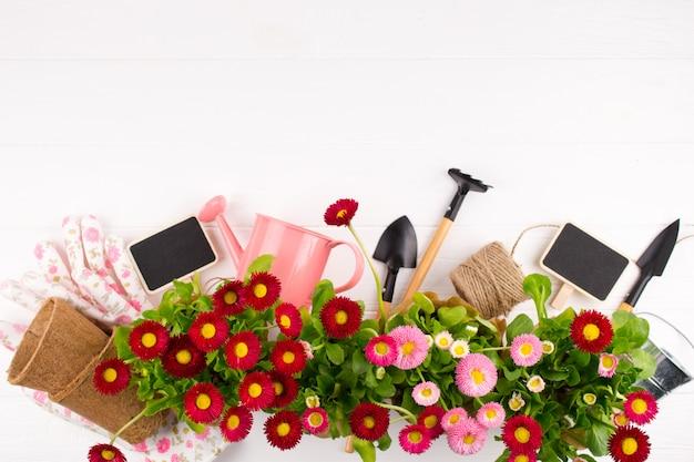 I primi fiori colorati primaverili pronti per essere piantati. cornice da giardinaggio., vista dall'alto