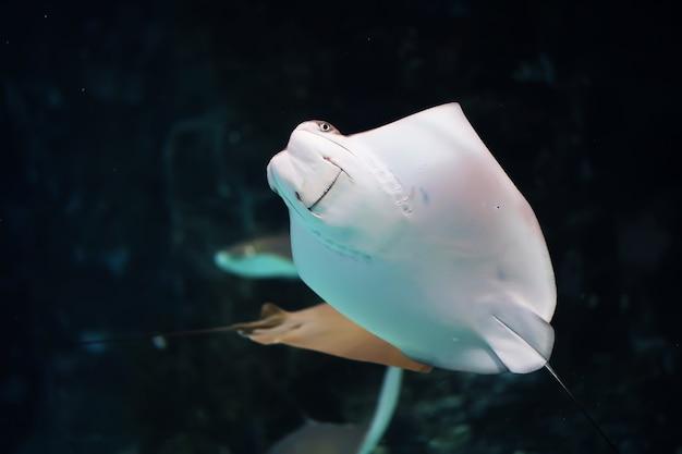 Pesce in un acquario. oceanario. pesci oceanici in acquario. concetto di protezione della natura. pesce sott'acqua nell'acquario