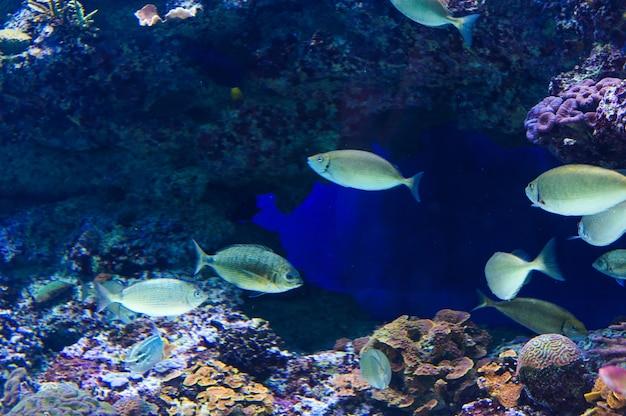 Pesce in un acquario sul mar rosso