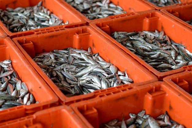 Merce nel carrello del pesce Foto Premium