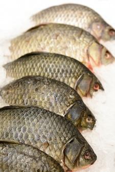 Carpa pesce sul ghiaccio