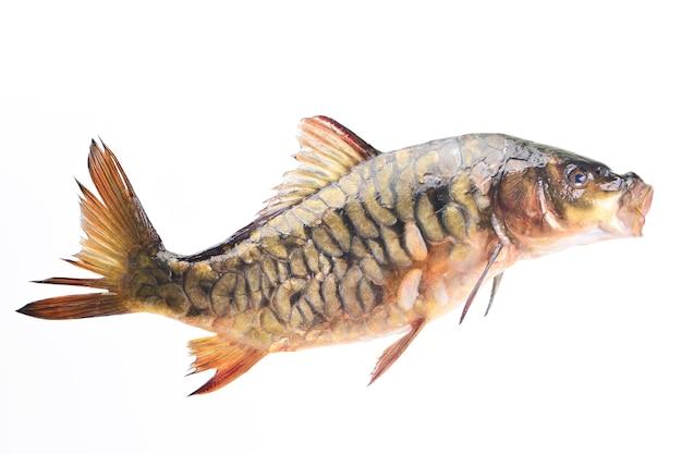 Carpa di pesce