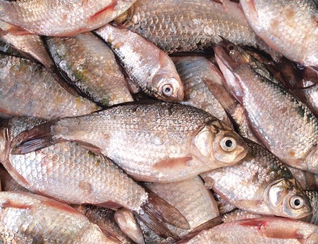 Pesce crucian