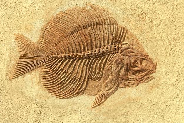 Fossile di pesce