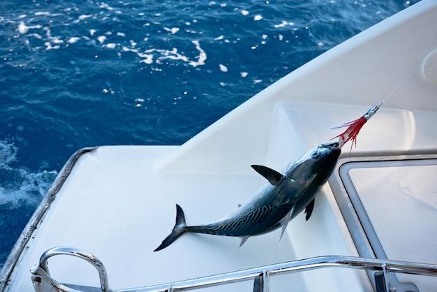 Pesce all'amo. pesca da una barca a vela.