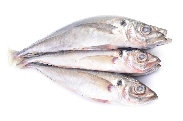 Sugarello di pesce