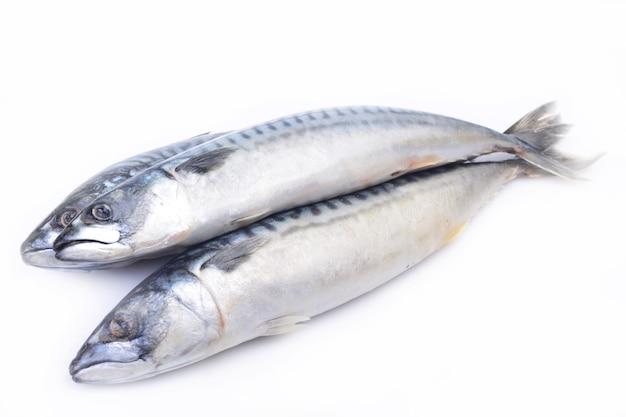 Pesce sgombro