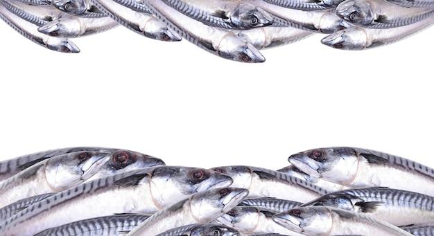 Sgombro di pesce