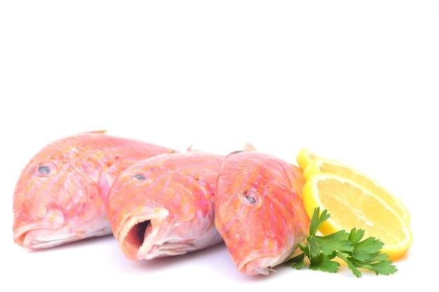 Triglie di pesce