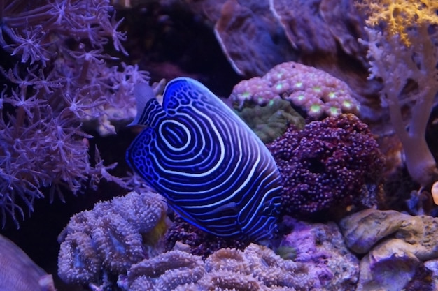 Pesci nuotano nel mar rosso, pesce colorato, eilat israele