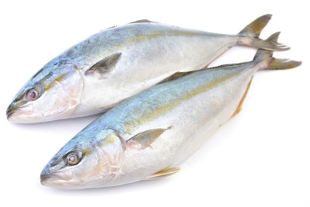 Pesce giallo isolato (ricciola giapponese)