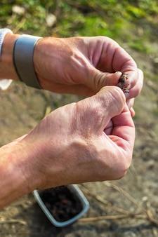 Fisherman infilando un lombrico su un amo da pesca. esca nelle mani
