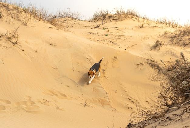 Un cane sano e in forma in piedi su una spiaggia deserta