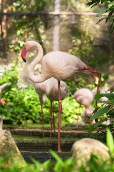 Vita di giorno dell'uccello del fenicottero con lo stagno e gli alberi nello zoo di dusit, bangkok.