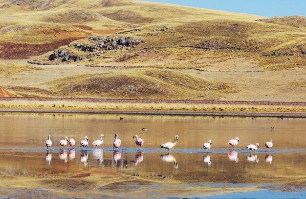 Flamingo in volo in montagna