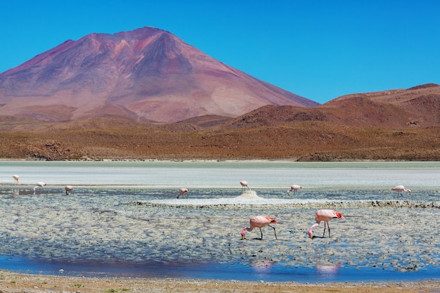Flamingo nel lago dell'altiplano boliviano