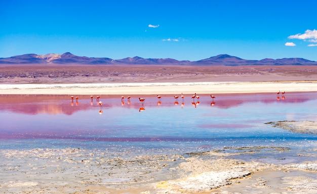 Fenicotteri nella laguna del colorado
