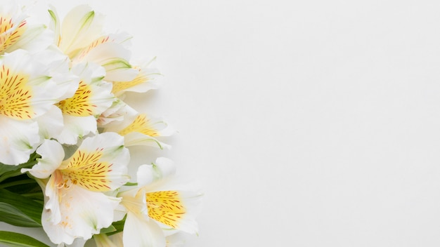 Bouquet di alstroemeria disteso con copia-spazio