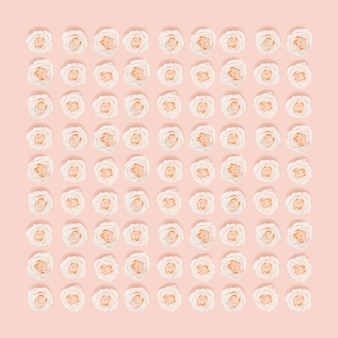 Motivo floreale piatto laici da rosa bianca fiori di rosa pastello colorato, layout creativo, astratto sfondo ambientale.