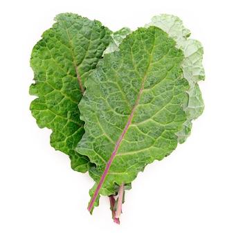 Foglie piatte di cavolo nero fresco a forma di cuore isolato su sfondo bianco. la vista dall'alto ama il cibo biologico sano.