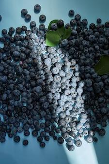 Disposizione piana dei mirtilli succosi organici freschi su fondo blu, luce dura del sole, vista superiore, spazio della copia. concetto di alimentazione sana e dietetica, antiossidante, vitamina, cibo estivo.
