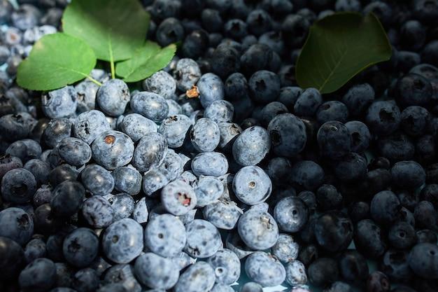 Disposizione piana dei mirtilli succosi organici freschi su fondo blu, luce dura del sole