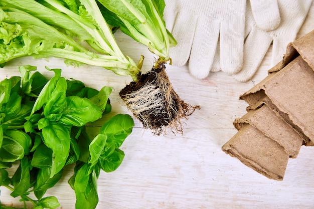 Lay piatto di attrezzi da giardinaggio, basilico, vaso di fiori eco, terreno sul tavolo di legno bianco.