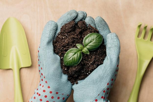 Lay piatto delle mani con guanti che tengono terreno e pianta