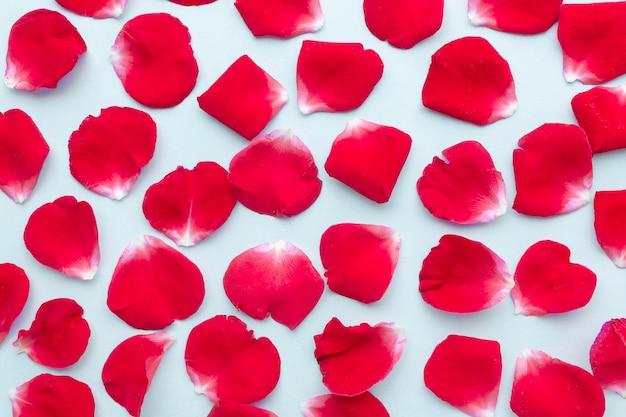 Disposizione dei petali di rose iceberg piatte
