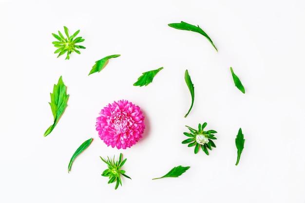 Layout piatto con bellissimi fiori rosa viola su sfondo pastello. biglietto di auguri di invito. copia spazio per il testo.