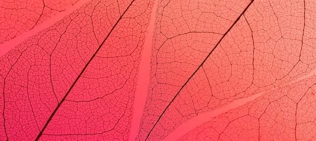 Lay piatto di foglie con texture trasparente