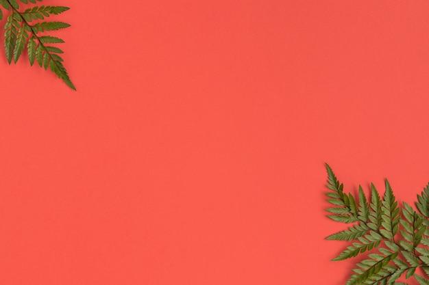Posa piatta di cosmetici naturali con foglie
