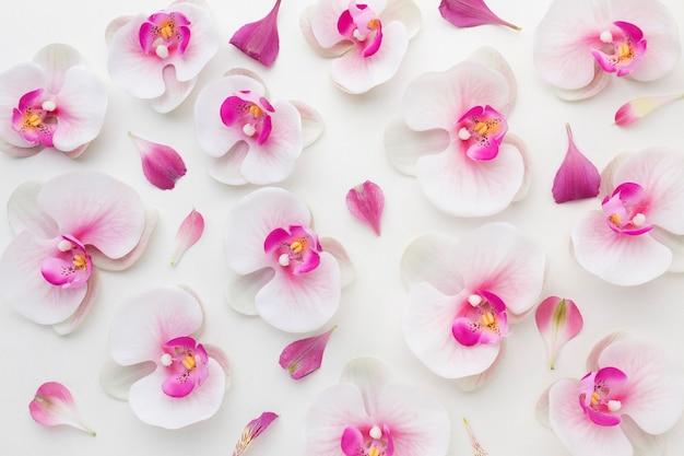 Disposizione di orchidee distese piatte