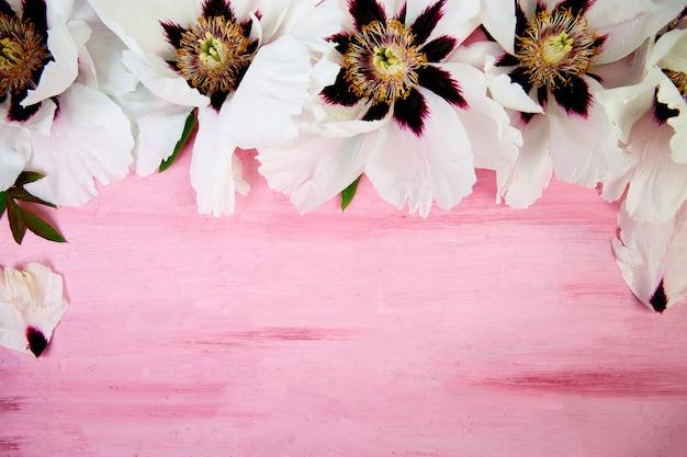 Modello piatto laici di bianco su sfondo rosa.