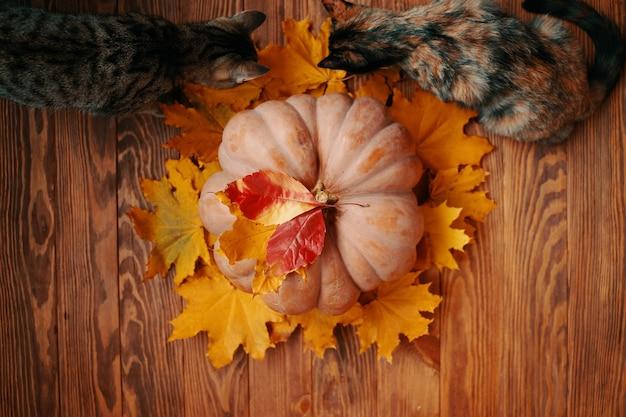 Lay piatto di una zucca rotonda matura con foglie autunnali rosse e gialle una grande zucca e due c...
