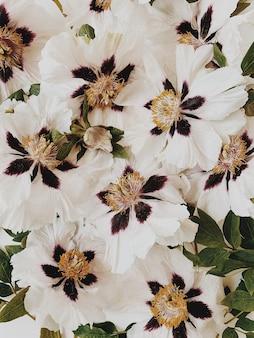 Vista piana laico e dall'alto. motivo floreale con peonie bianche, viola e gialle e foglie verdi