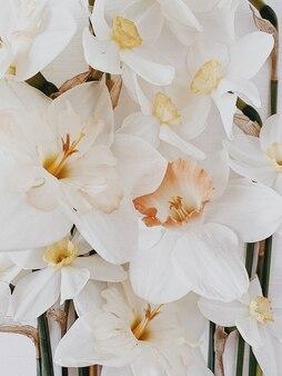 Vista piana laico e dall'alto. motivo floreale con narciso bianco e giallo