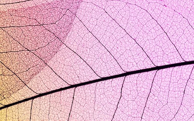 Lay piatto di foglie traslucide con tonalità colorate