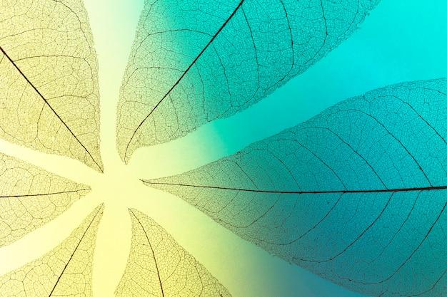Lay piatto di foglie trasparenti texture
