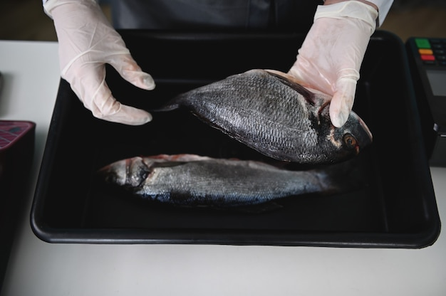 Disposizione piana di due pesci mediterranei freschi, dorado sulla tavolozza e mani del pescivendolo nel negozio di frutti di mare. sfondo di cibo. mercato del pesce mediterraneo