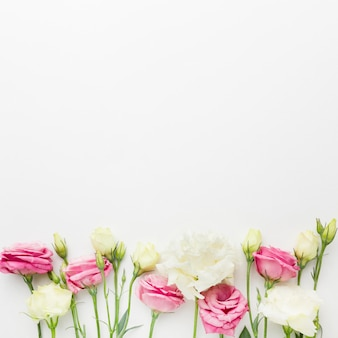 Mini rose bianche e rosa piatte distese con copia-spazio