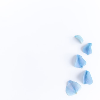 Lay piatto con petali di ortensie o ortensie blu.