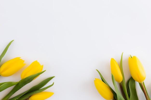 Lay piatto con fiori di tulipano giallo su sfondo bianco. concetto per biglietto di auguri per la pasqua, la festa della mamma, la giornata internazionale della donna, il giorno di san valentino.