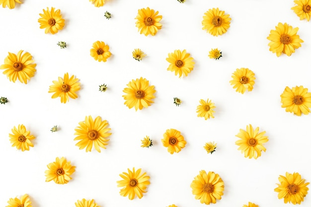 Modello di boccioli di fiori margherita gialla laici piatto su bianco