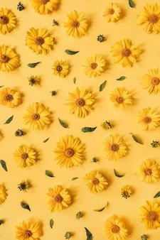 Modello di boccioli di fiori margherita gialla laici piatto sulla superficie gialla