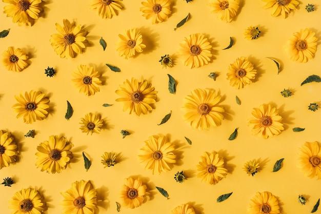 Modello di boccioli di fiori margherita gialla piatto laici su giallo
