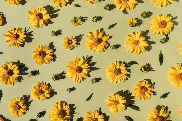 Modello di boccioli di fiori margherita gialla piatta laici