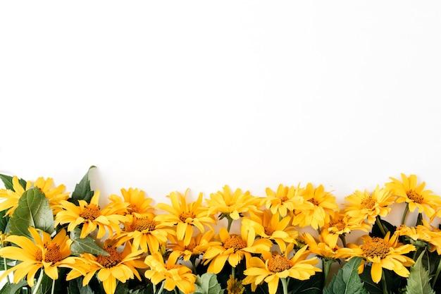 Modello di fiori margherita giallo piatto laici su bianco